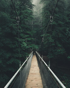 Point of view shot of a narrow suspension bridge in a thick beautiful forest